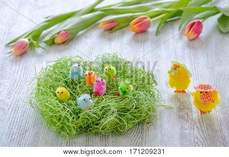 Easter chicken in the nest and tulips on wooden background