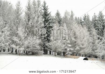 Snowbound Winter Forest In Overcast. Beautiful Winter Landscape