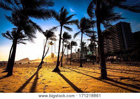 Palm Trees by Sunset in Copacabana Beach, Rio de Janeiro, Brazil