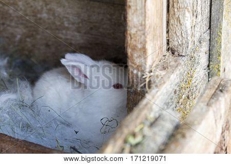 white newborn bunny hiding in corner of old cage