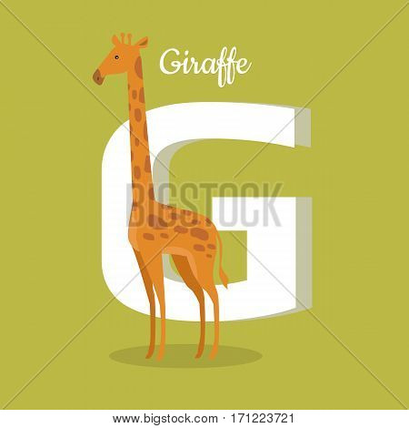 Animals alphabet. Letter - G. Brown giraffe stands near letter. Alphabet learning chart with animal illustration for letter and animal name. Vector zoo alphabet with cartoon animal on green background