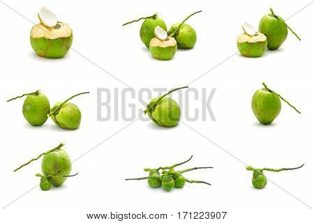 Collection Set Of Coconut Ripe And Tasty Isolated On White Background