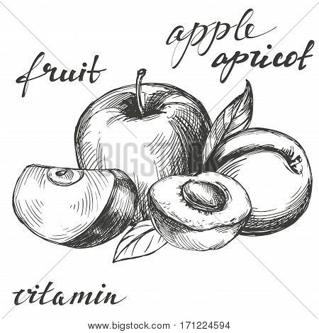 apple and apricot fruit group set hand drawn vector llustration realistic sketch