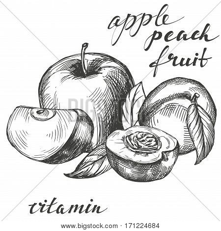 apple and peach fruit group set hand drawn vector llustration realistic sketch