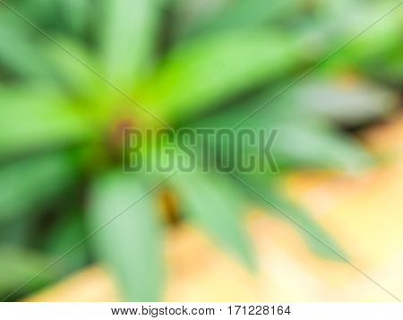 Blur of Ornamental plant and tree beside the earthenware tile floor