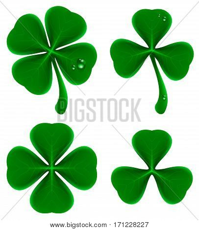 Set of green leaves of clover. Shamrock and quatrefoil. Isolated on white realistic vector illustration