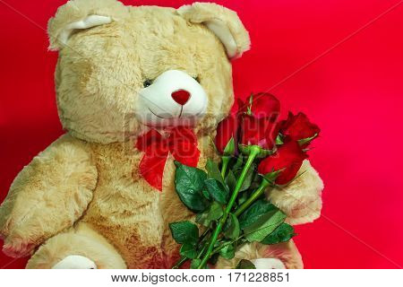 Cute Dolly Bear Holding Red Rose, Valentine Day Concept
