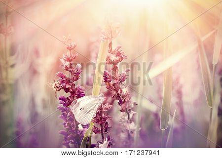 White butterfly on purple flowers in meadow lit by sun rays