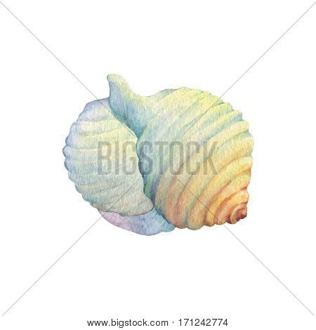 Illustrations of sea shells. Marine design. Hand drawn watercolor painting on white background.