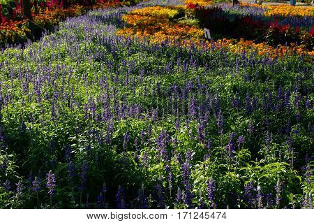 Colorful flowers field in a park in sunlight can use as background