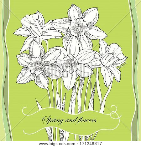 Vector bouquet with outline narcissus or daffodil flowers in black on the green background. Ornate floral element for spring design, greeting card. Bunch of narcissus flower in contour style.