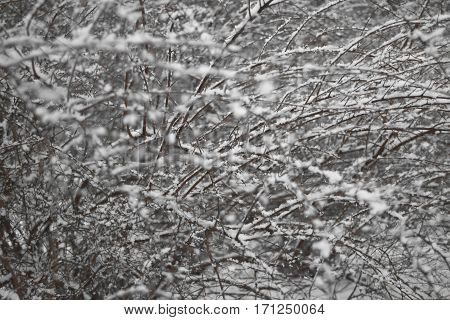 thr winter cold bushes snowstorm abstract background