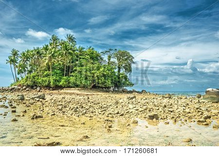 Deserted ocean shore with palm grove after a rain on a background of a stormy sky
