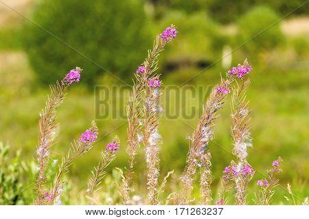 Field grass overgrown flowers summer sun light