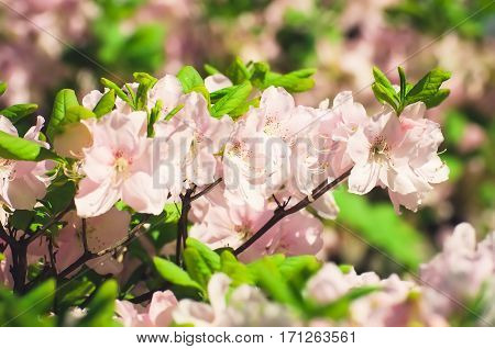 flowers in the garden in the spring in the shrubs and trees