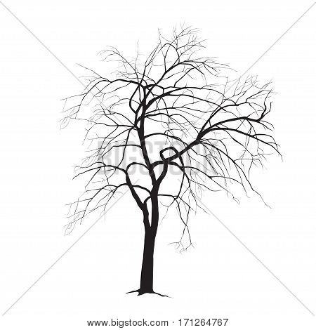 Apple-tree silhouette in the winter = Apple-tree silhouette in the winter with fallen leaves on a white background