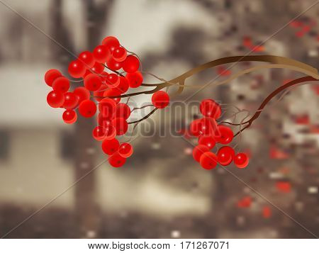 An illustration of a branch with red rowanberries