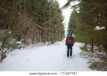 Man traveler with a backpack goes on the path between the green of pine trees in the winter mountains.