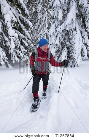Traveler goes in snowshoes among snow covered fir trees - winter . Wide angle.