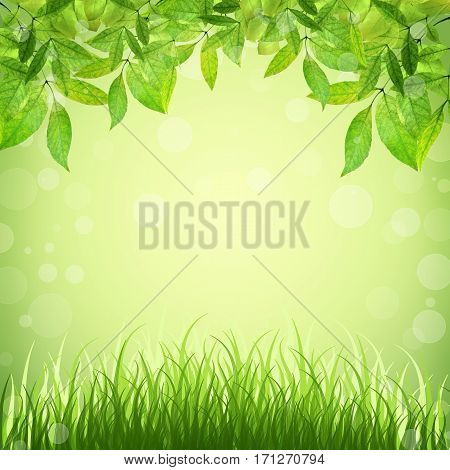Spring background. Young leaves and grass in sunlight. Natural background with bokeh. Summer. A park. Regeneration. Close-up. Nature awoke.