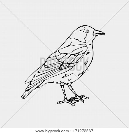 Hand-drawn pencil graphics,small bird, jackdaw, magpie, bird, blackbird, nightingale,  crow. Engraving, stencil style. Black and white logo, sign, emblem, symbol. Stamp, seal. Simple illustration. Sketch.