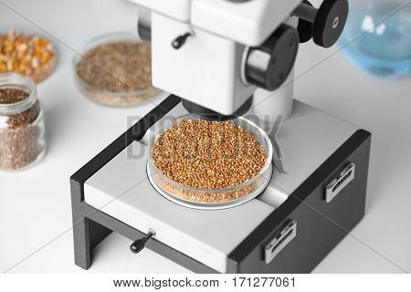 Microscope with cereal grains in Petri dish on table at laboratory