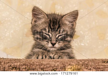 Small cute kitten napping, lying on the couch. poster