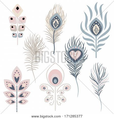 Peacock feathers vector illustration clipart. Pale pink and blue peafowl bird exotic hackles.