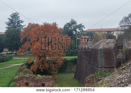 The view of a rusty tree at Medici Fortress of Santa Barbara. Pistoia. Tuscany. Italy.