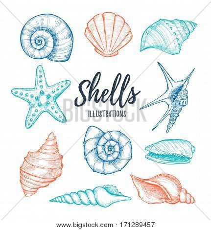 Hand Drawn Vector Illustrations - Collection Of Seashells.  Marine Set. Perfect For Invitations, Gre