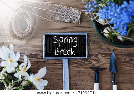 Sign With English Text Spring Break. Sunny Spring Flowers Like Grape Hyacinth And Crocus. Gardening Tools Like Rake And Shovel. Hemp Fabric Ribbon. Aged Wooden Background