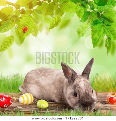 Easter bunny and Easter eggs on green grass, close-up.