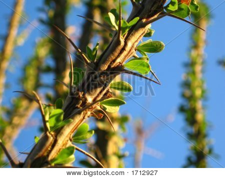 Desert Plant With Spines