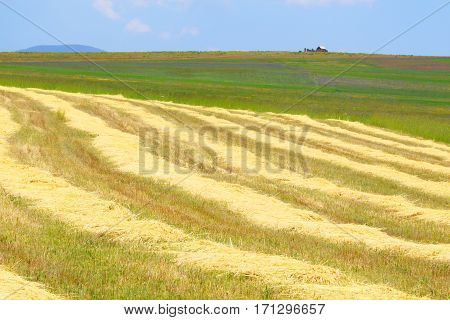 Harvest.A farmer's field.Summer landscape.Harvested in the summer on the field in a mountain valley.