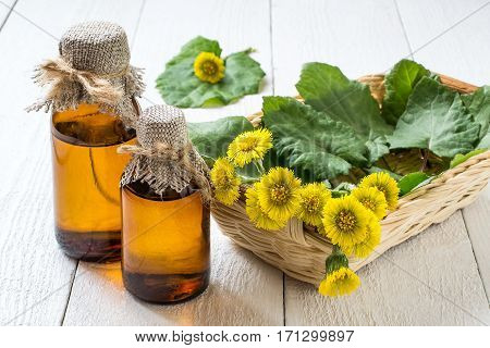 Medicinal plant coltsfoot (Tussilago farfara). The infusion leaves and flowers in a basket on white wooden background. Selective focus
