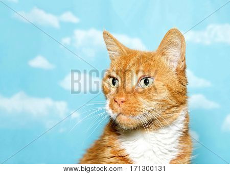 Portrait of one rumbled scruffy senior cat looking to viewers left. Blue background sky with clouds.