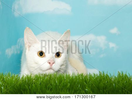 One white tabby cat laying in tall grass looking up to viewers right. Blue background sky with clouds. Copy space.
