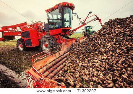 Agricultural vehicle harvesting sugar beets. Ukraine Europe