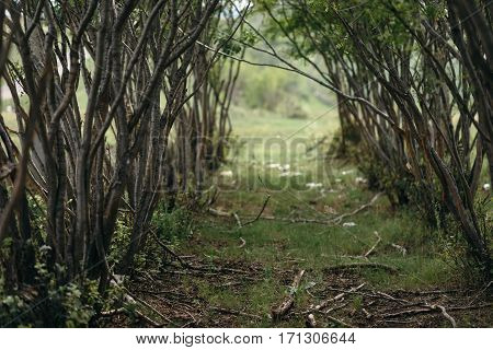 Natural tunnel in forest. Road path way through lush, foliage and trees of evergreen dense rain forest. Mysterious magic background.