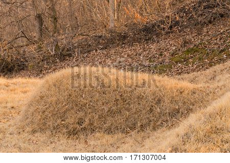 Burial mound with brown grass in woodland area on the side of a mountain