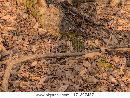 Large dead tree laying on the ground in a woodland area