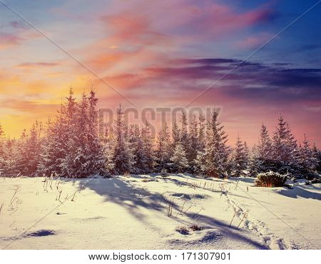 Fantastic winter landscape and worn trail leading into the mountains. Sunset. In anticipation of the holiday. Carpathian, Ukraine, Europe.