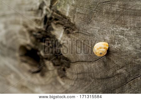 Snail on table, closeup, conceptual, isolated, rustic