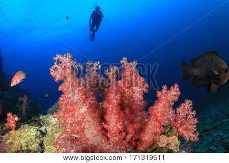 Scuba dive coral reef. Divers underwater in ocean