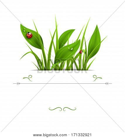 Green grass, plantain and ladybugs isolated on white. Floral nature spring background