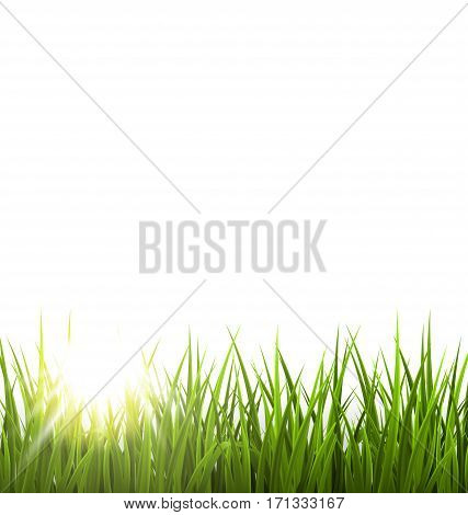 Green grass lawn with sunrise on white. Floral nature spring background