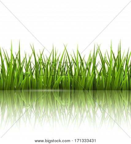 Green grass lawn with reflection on white. Floral nature spring background