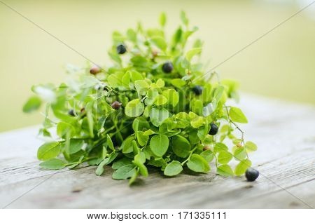Fresh green bouquet of violet bilberries and greenry on the wooden background