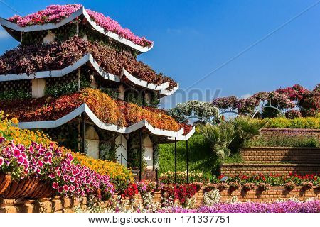 Dubai, UAE - January 5, 2017.   Dubai Miracle Garden -  Floral house in pagoda style. Dubai Miracle Garden is the largest natural flower garden in the world