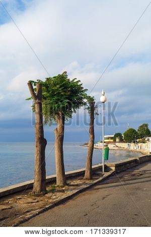 Cropped trees along the road in the old town of Nessebar Bulgaria. Sunny summer day. Nesebar is an ancient town on the Bulgarian Black Sea Coast.